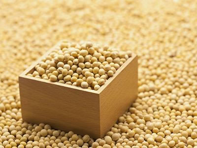 Soybean futures plunge to lowest in a decade as US-China trade war escalates