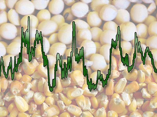 Bullish corn, a Latin bumper crop and short funds? Behold the state of world corn markets
