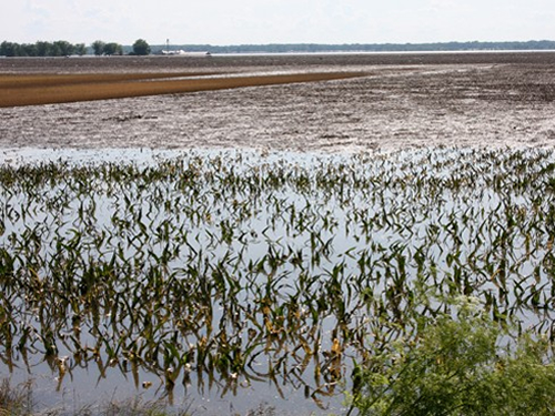 The Rain & The Damage Done: Estimating the impact of America's flood-drenched corn fields