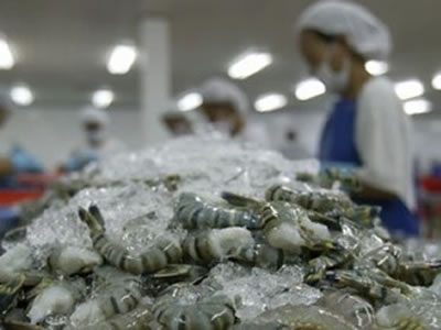 Growing Japanese communities overseas a boon to Vietnam shrimp exports