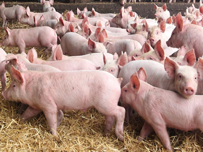 Maintaining piglet growth and health without zinc oxide