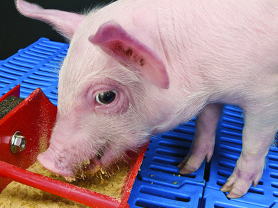 A specific phytogenic feed additive helps to improve animal welfare and health status of post-weaning piglets under farm conditions with increased diarrhea incidence