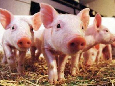CP in China plans to raise 10 million pigs a year by 2021
