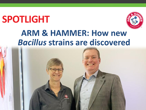 ARM & HAMMER: How new Bacillus strains are discovered