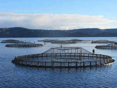 Pure Salmon to build US$194-million facility in France, its biggest yet